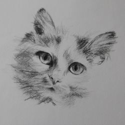 Dessin Chat 2