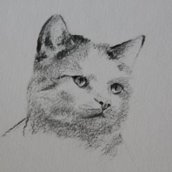Dessin Chat 3