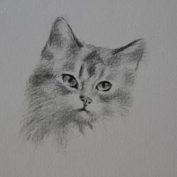 Dessin Chat 4